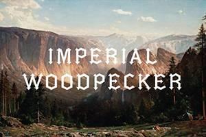 Imperial Woodpecker